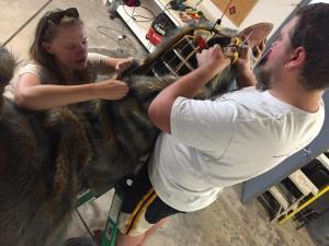 dinosaur anzu head fabrication