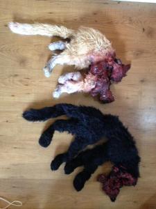 prop dead cats