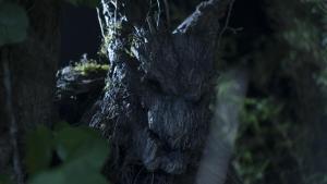 tree wolf on set 1