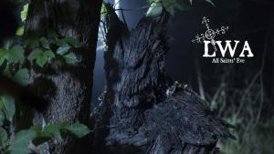 tree wolf on set 4